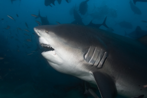 Warning As Deadly Sharks Stalking Paddleboarders In