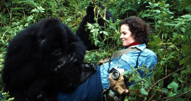 GORILLAS IN THE MIST, Sigourney Weaver, 1988, (c) Universal/courtesy Everett Collection