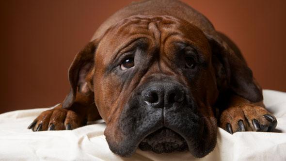 Expert warns over pet food ingredients