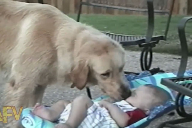 Dogs and babies video