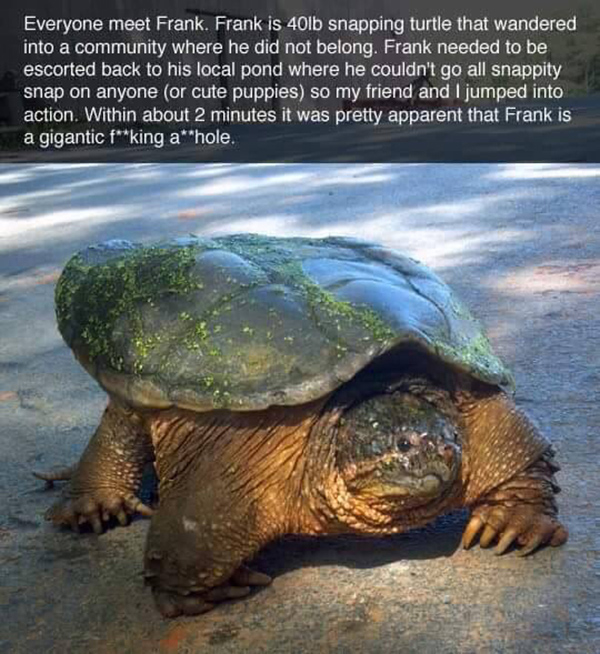 The Epic Tale Of Frank The Snapping Turtle