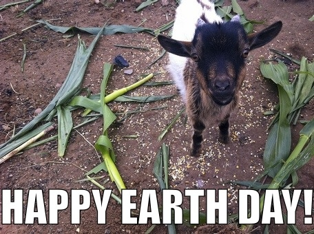 Baby Goat Earth Day