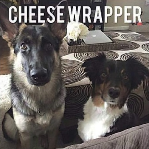 dogs make bad alarm systems, dogs cheese wrapper
