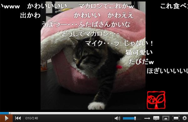 マカロンベッドから出たい→でも眠い→ウトウト…ハッ!睡魔と闘うネコが可愛すぎる