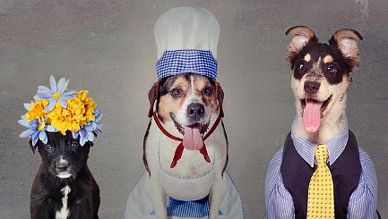 Rescue dogs get all dressed up for adoption photoshoot