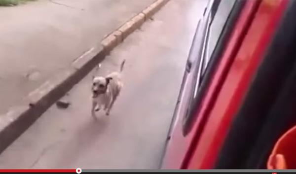 飼い主が乗った救急車の後を走って追いかける忠犬に世界中が感動