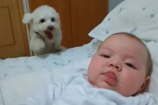 Puppy's hilarious attempts to see newborn baby (video)