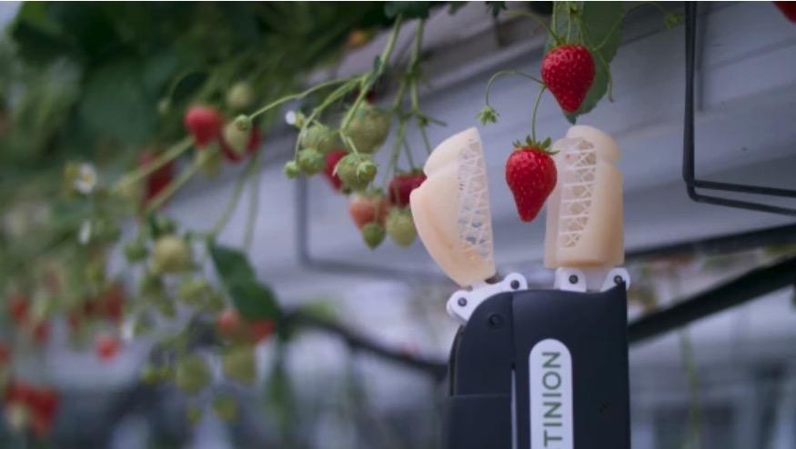 Erdbeerpflücker-Bot soll 2019 auf den Markt kommen