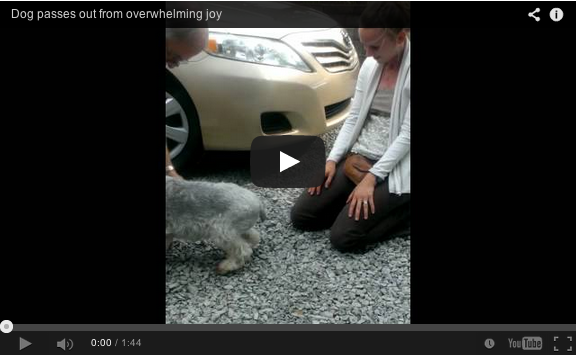 Dog faints with joy when owner comes home after 2 years travelling: VIDEO