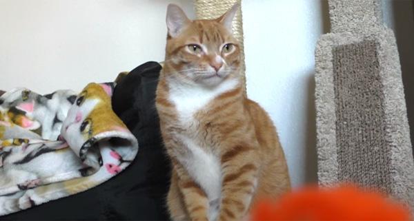 ネコまっしぐら!猫好きが知っておきたい「猫ライフハック」BEST5【動画】