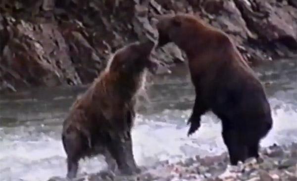 衝撃!野生の動物たちのガチすぎるベストファイトTOP5【動画】