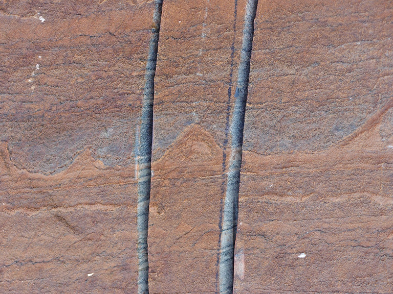 Geologists have discovered what could be the world's oldest fossils