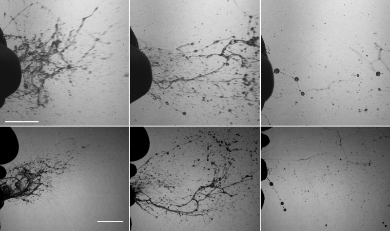 Top and side views of the rapid fragmentation process of mucosalivary fluid occurring during a healthy sneeze. They reflect the sequence of formation of sheets and then filaments, ultimately leading to the formation of respiratory droplets outside of the mouth. These were captured with a camera operating at 6,000 to 8,000 frames per second.