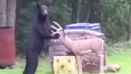 Bear attacks plastic deer in garden