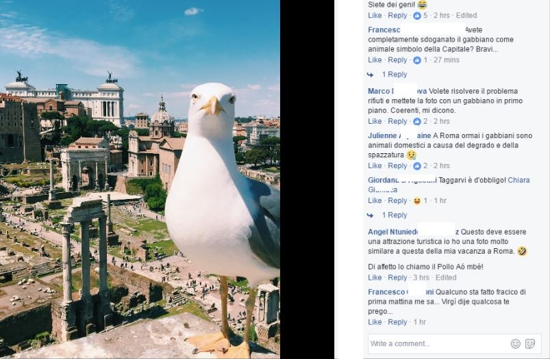 Roma, gabbiano appare e scompare da profilo fb del Comune