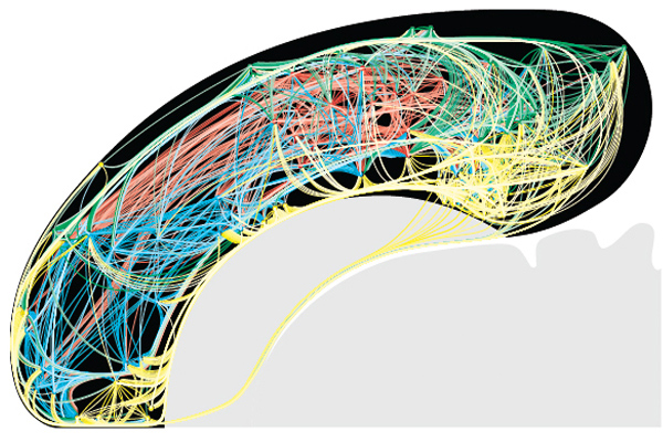 Rat brains are basically wired up like miniature internets