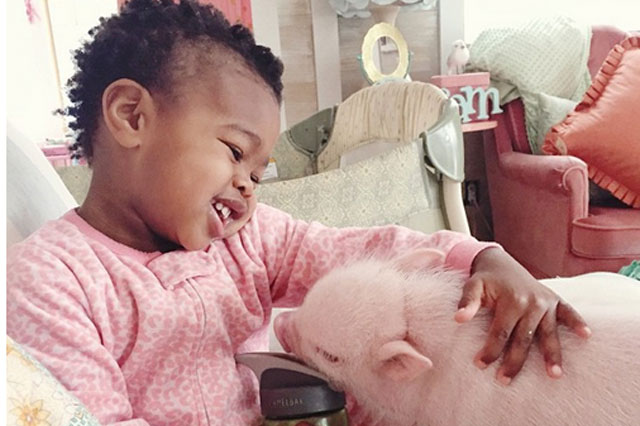 Two-year-old's friendship with adorable fluffy pink pig will melt your heart
