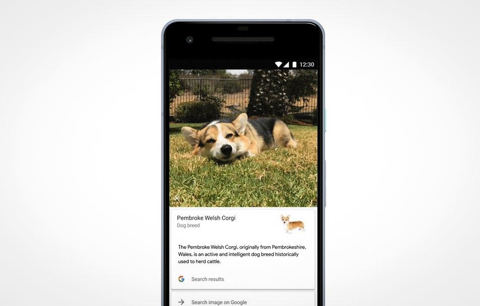 Google Lens erkennt jetzt Blumen-, Katzen-, Hunde- und Pflanzenarten