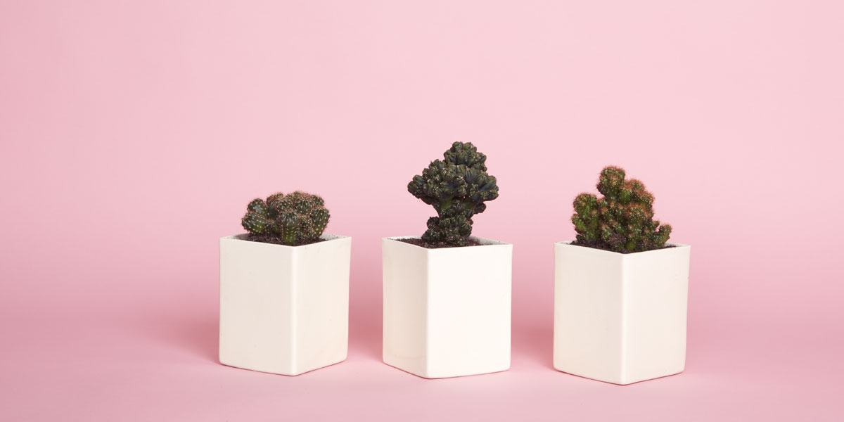 The Sill plant shopping website