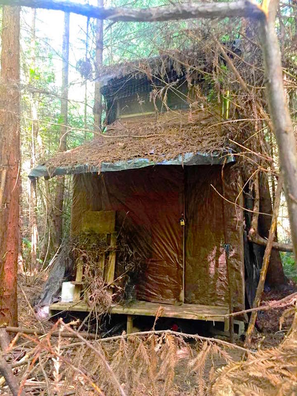 Mystery Cabin In The Woods Is Bizarre
