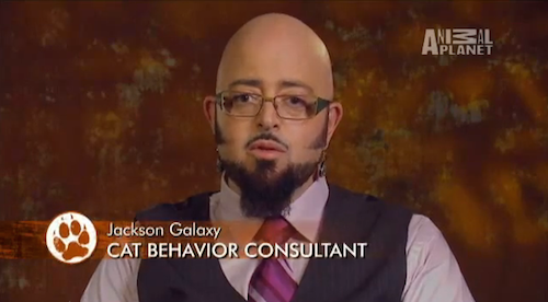 most useless professions, cat behavior consultant