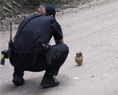 パトロール中の保安官が路上で見つけたのは…超かわいい小さなフクロウ!【動画】