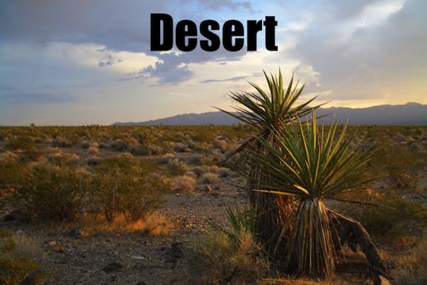 50 words for 50 states, nevada desert