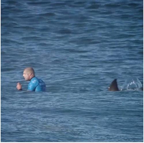 巨大サメがサーファーを襲撃!蹴り、パンチで応戦しサメをブッ飛ばす【動画】