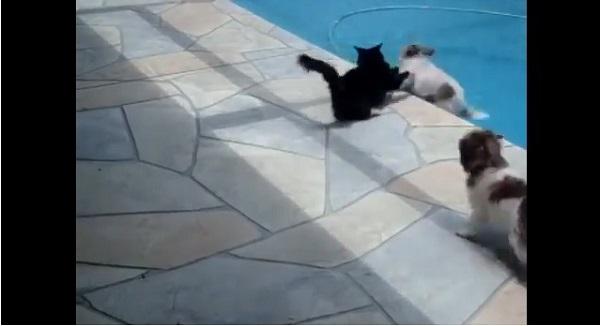 ニャンコが犬に昼寝をジャマされる→犬をプールに突き落とすwww【笑撃動画】