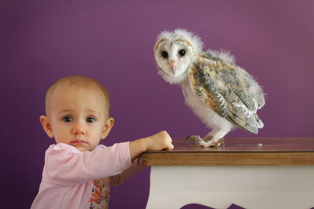 Baby barn owl is having a hoot with his 10-month-old 'mum'