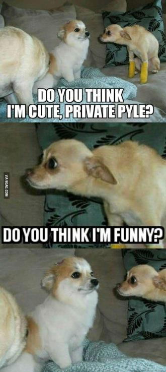 funny photos, funny memes, lolz