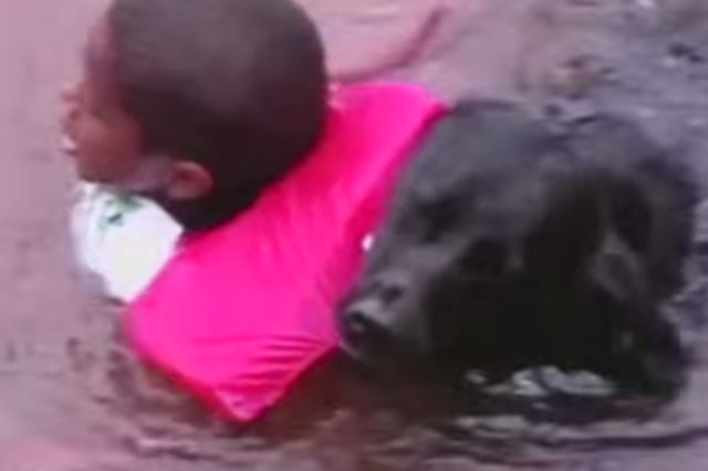 Dog rescues boy from water fun