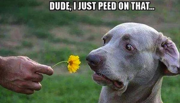 funny-dog-dude-i-just-peed-on--6145.jpg