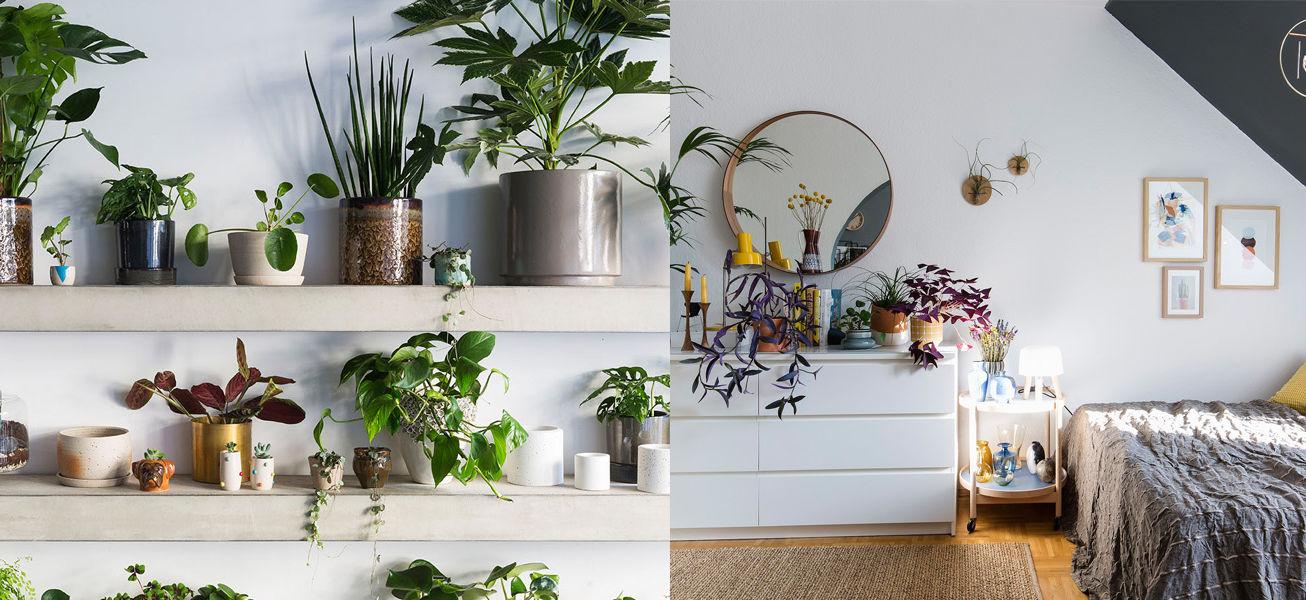 urban-house-plants
