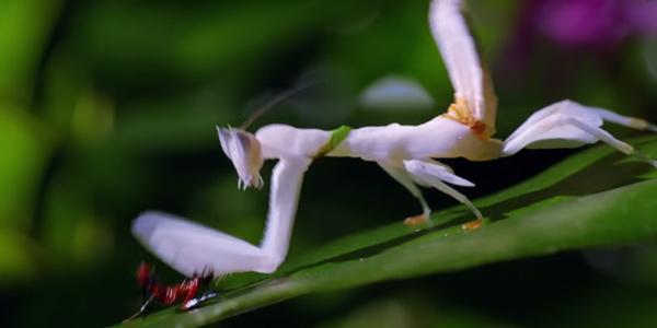 昆虫たちによるミクロレベルの壮絶バトルがスゴすぎる!衝撃の展開へ【動画】