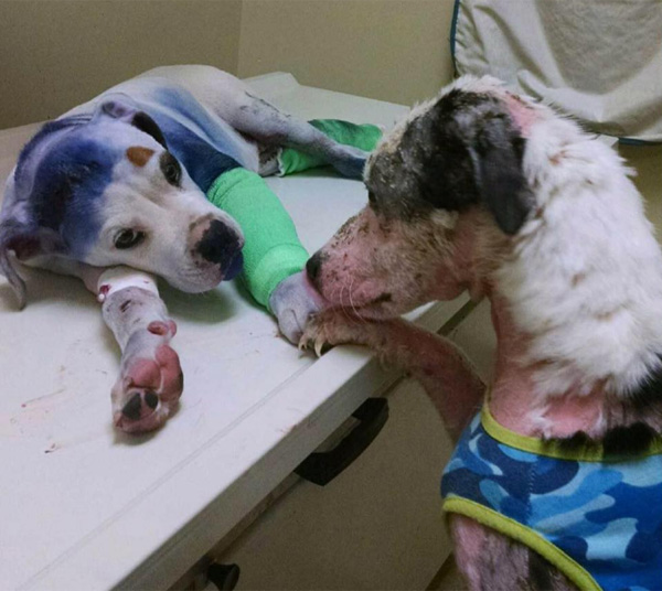虐待で保護されたワンコにそっと寄り添う先輩犬…二匹の姿に世界が号泣【動画】