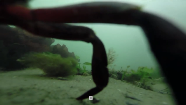 海に落としたGoPro、1年後に引き上げられたら何が映ってた?【動画】