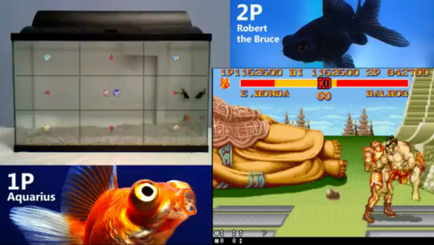 Fish Play Street Fighter
