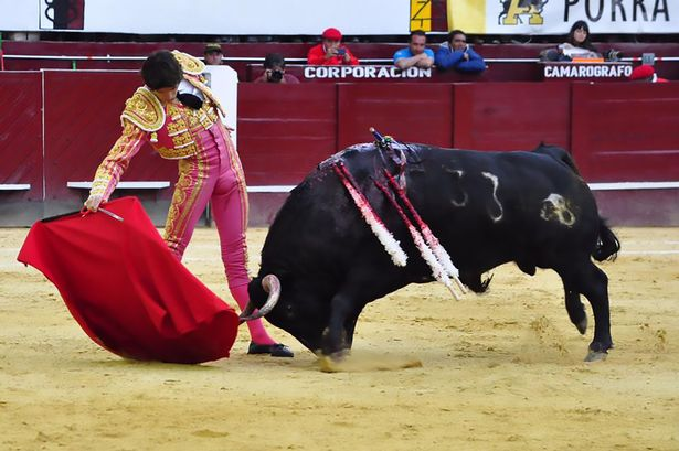 Terrifying moment bull fighter is thrown in air