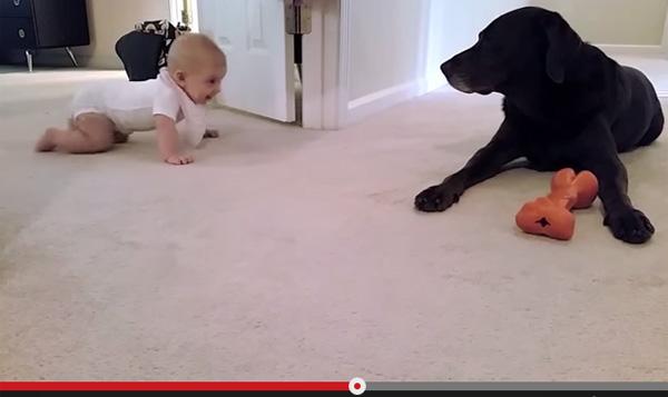 初めてのハイハイをした赤ちゃんに飼い犬がとった思いもよらぬ行動とは【感動動画】