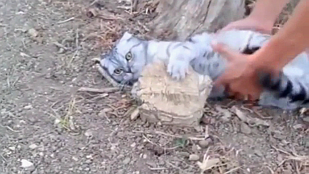 Stubborn cat steadfastly refuses to get up and go home