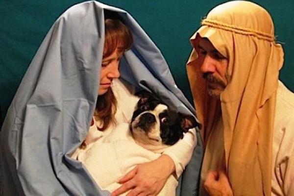 funny christmas cards, funny christmas photos, nativity dog