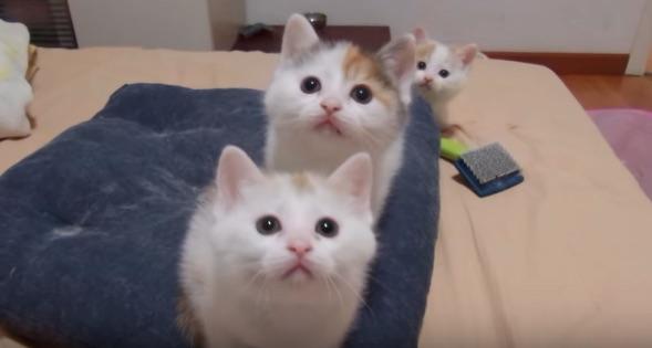 EXILEかよ!3匹の子ネコの息の合ったダンスが可愛いすぎる【動画】