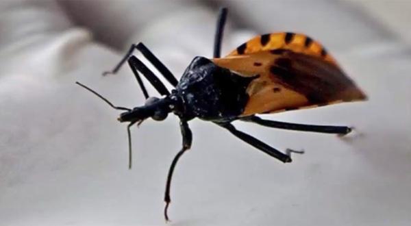 魔の吸血昆虫が全米の半分以上の土地に生息地を拡大!感染症で死亡のリスクも【動画】