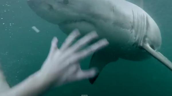 恐怖!水中ダイビングした瞬間、目の前に巨大サメ!!危機一髪すぎる映像