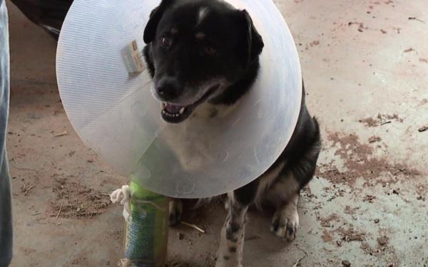 トルネードで300メートルも飛ばされた犬が、命からがら生き延びる!?