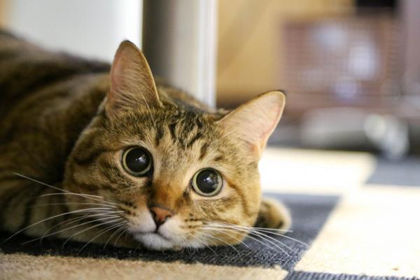 猫を飼うことで健やかに? 猫を飼うべき4つの理由