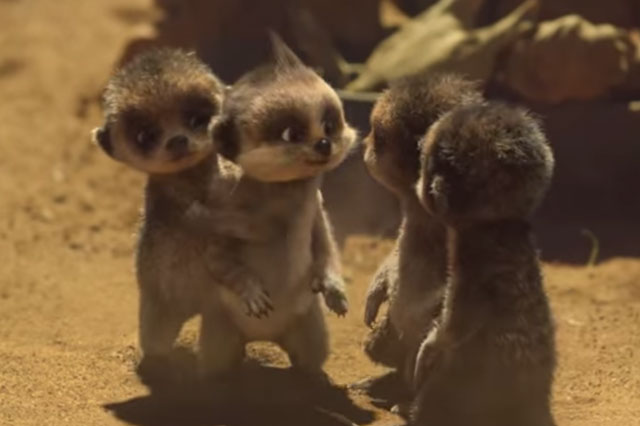 Compare the Meerkat fans devastated by baby Oleg's farewell ad