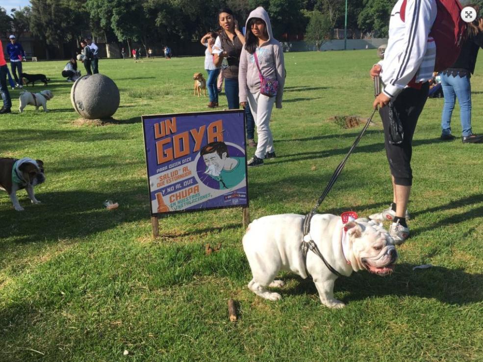 (FOTOS) Gordotón, la tercera edición de la competencia de bulldogs