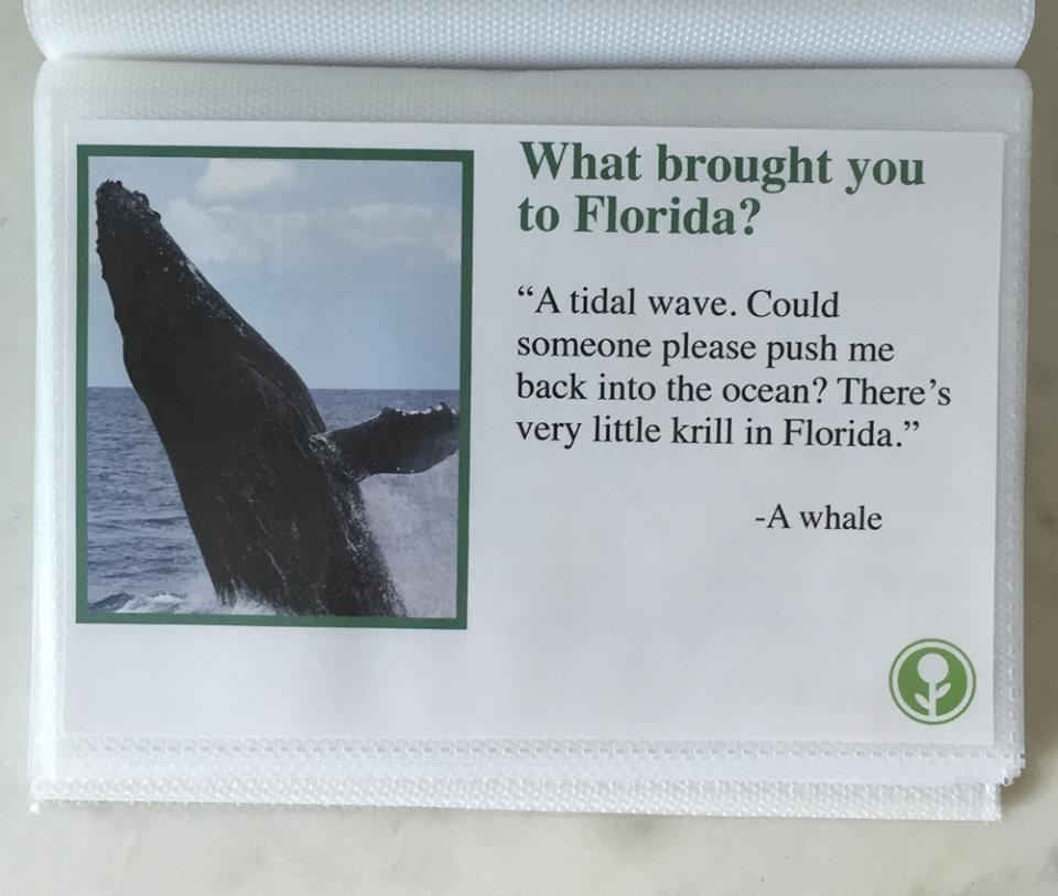 what brought you to florida guest book airbnb, obvious plant florida guest book, what brought you to florida tidal wave whale